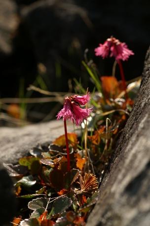 ホタル&横岳080613 312 のリサイズ画像.jpg