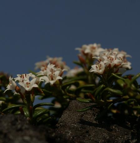 ホタル&横岳080613 370 のリサイズ画像.jpg