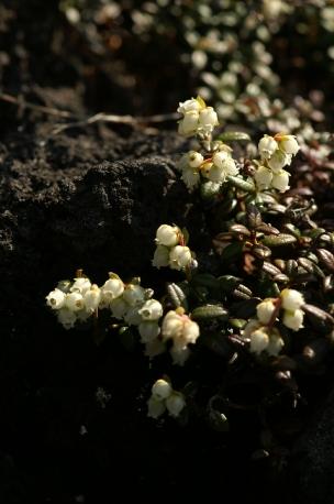 ホタル&横岳080613 374 のリサイズ画像.jpg
