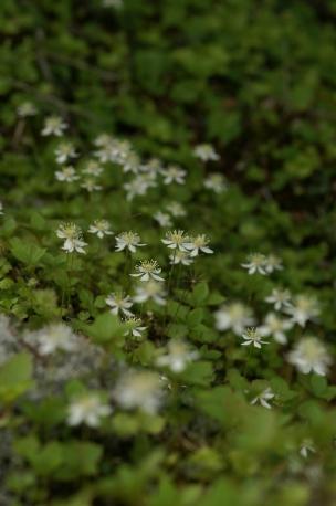 ホタル&横岳080613 467 のリサイズ画像.jpg
